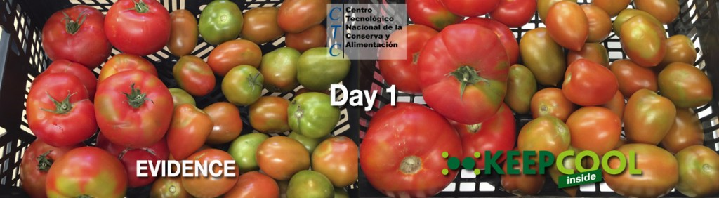 Day 1 for comparison, tomatoes with no filter (testimonial evidence) and with the KEEPCOOL ethylene absorbing filter