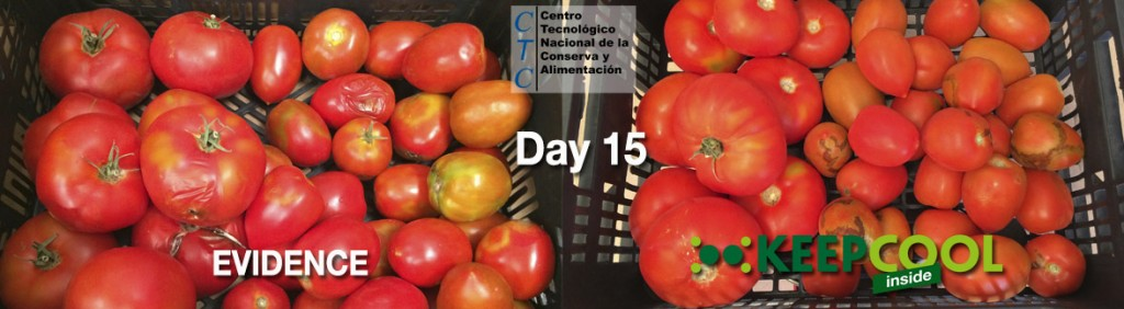 Day 15 for comparison, tomatoes with no filter (testimonial evidence) and with the KEEPCOOL ethylene absorbing filter