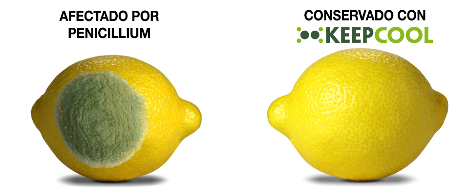 Limon-afectado-KEEPCOOL