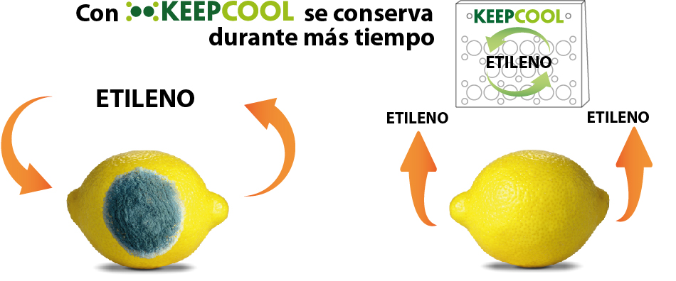 Limpieza-etileno-KEEPCOOL